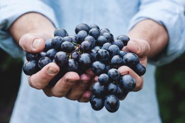 Fruit for nutrition